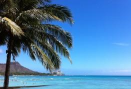 ハワイに行ったらゲットしたいモロッカンオイル!
